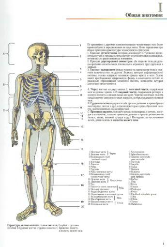 человеческого тела