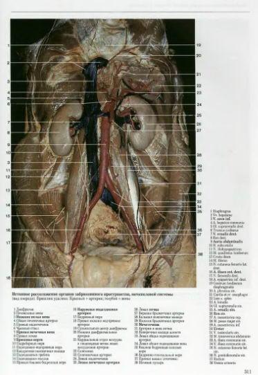 Большой атлас по анатомии.